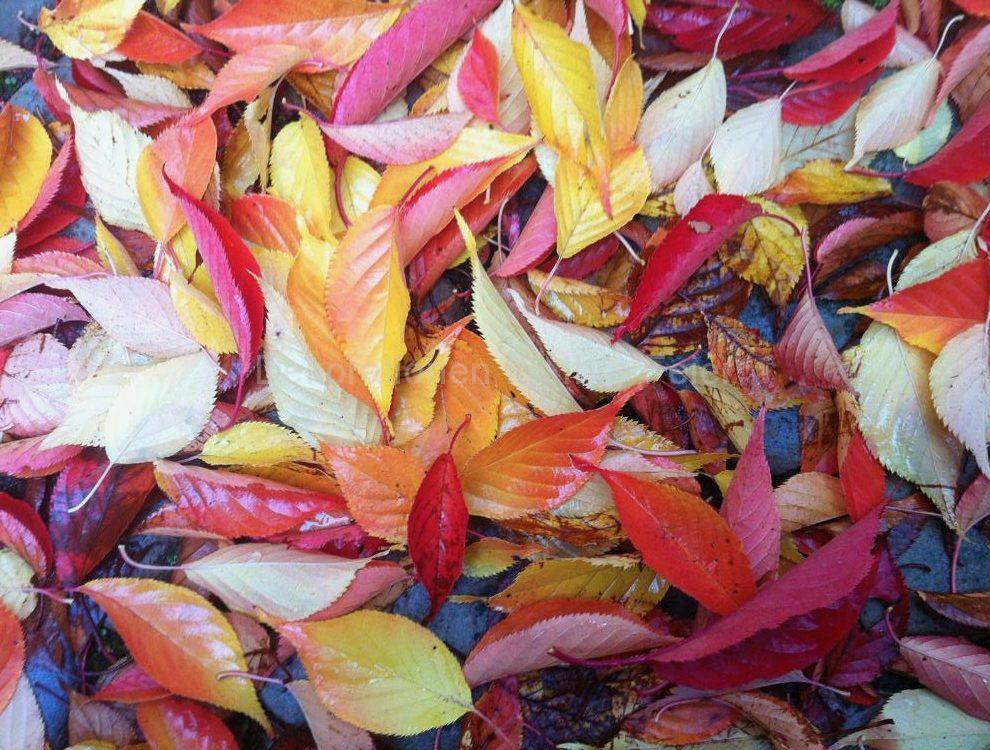 Die ganze Palette der Farben in diesem Bild mit bunten Blättern